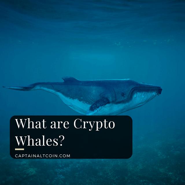 Cá mập Bitcoin là gì? Tác động cá mập bitcoin đến thị trường