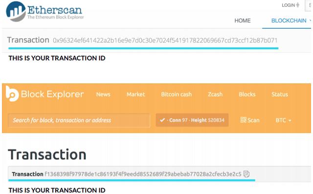 Cách tìm TxID trên giao diện của nền tảng Etherscan